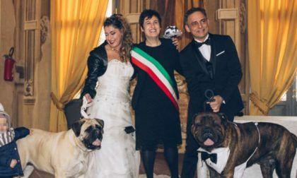 Amici a quattro zampe al matrimonio 2