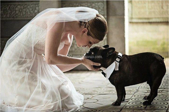 Amici a quattro zampe al matrimonio 12