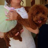 Cani: si o no al matrimonio? - 1