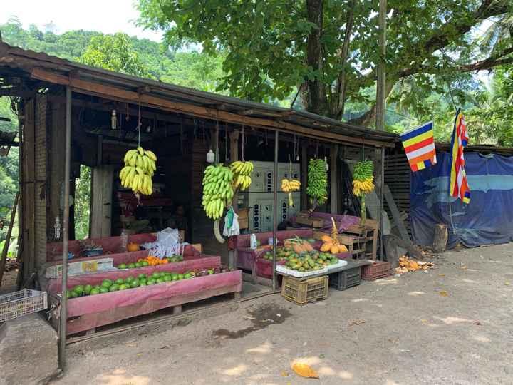Viaggio di nozze in Sri Lanka - 4