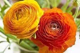 Consiglio Bouquet! Help! - 3