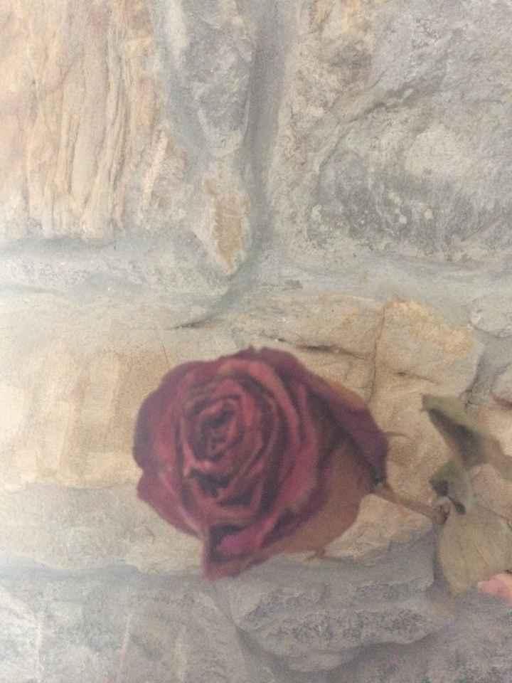 Conservare bouquet? - 1