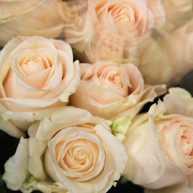 Che fiori sceglierete!? - 2