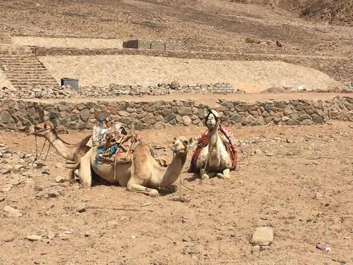 Sharm che sorpresa 😮 - 1