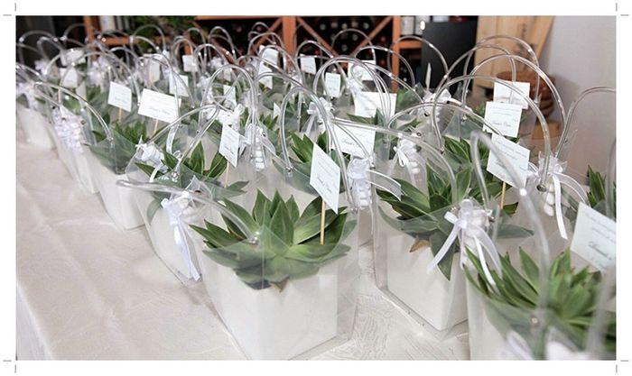 Molto Help sacchetti per bomboniere piante grasse - Fai da te - Forum  OK14