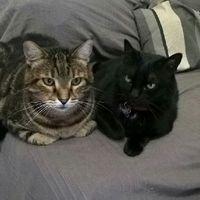 I nostri animali ♥️ - 3