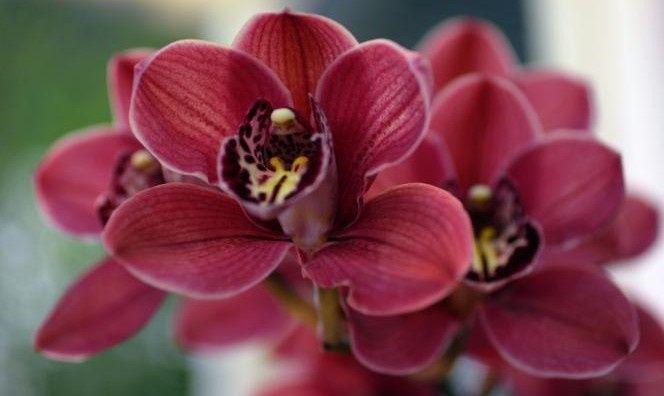Color Marsala e fiori 2