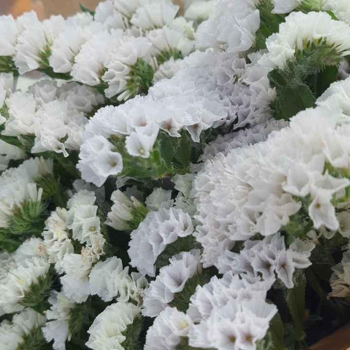 Help fiori - 1
