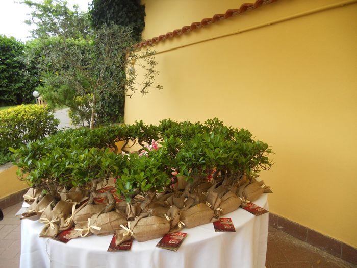 Bomboniere pollice verde fai da te forum for Bonsai prezzi
