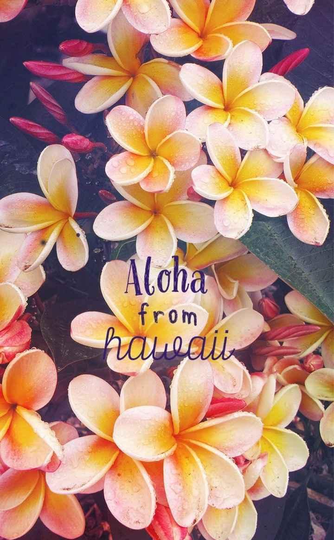 Hawaii 🌺 - 1