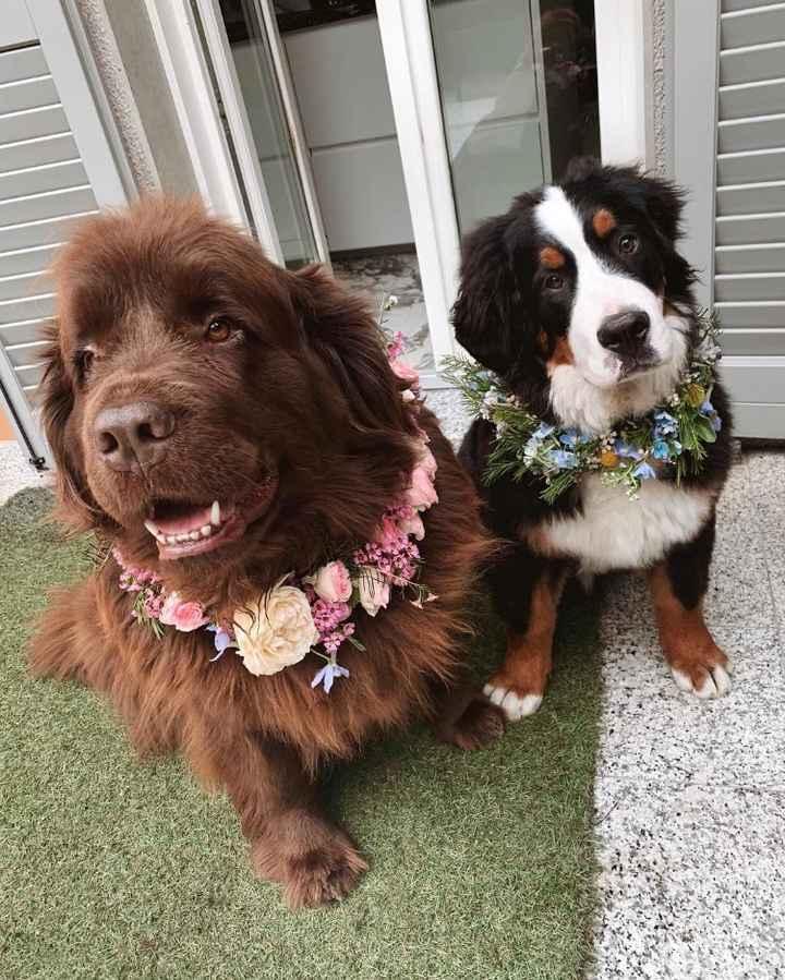Nadine e Gnomo, i loro due cani, che saranno presenti il giorno delle nozze
