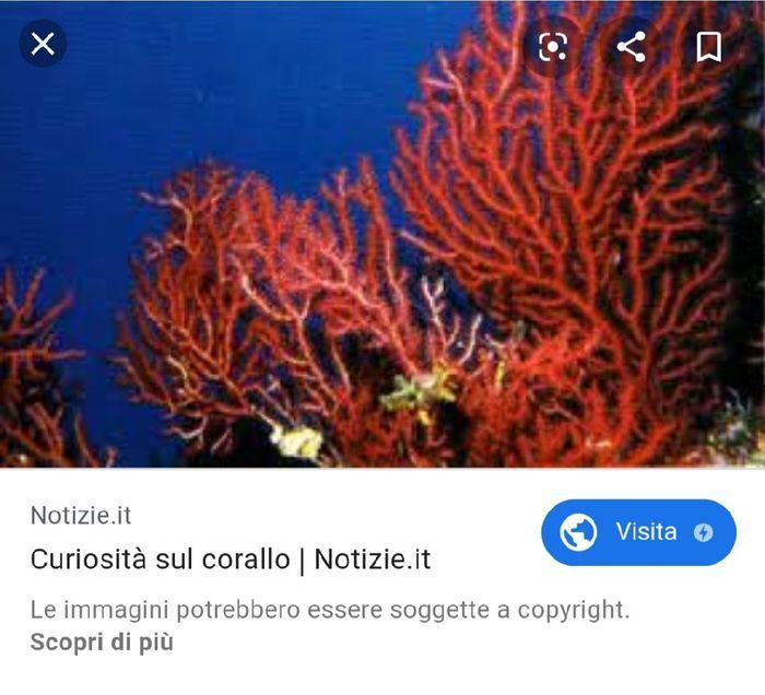 Tema corallo - 1