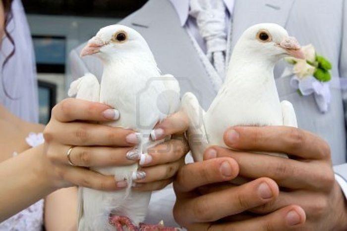 volo delle colombe sposi