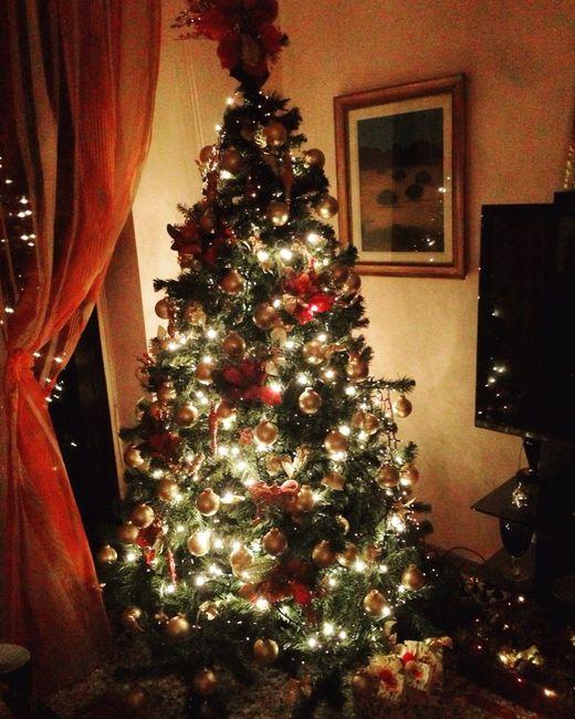 Il nostro albero - 1