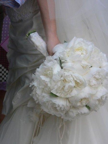Ortensie Matrimonio Costo : Aiuto allestimento con ortensie bianche pagina