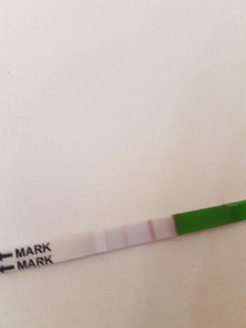 Test canadesi ovulazione - 1