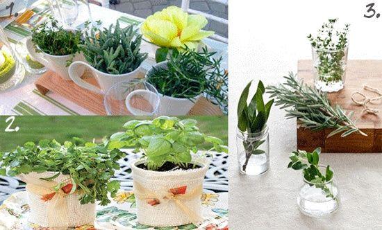 Matrimonio Tema Erbe Aromatiche : Spezie piante aromatiche ricevimento di nozze forum
