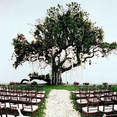 Allestimento albero con tappeto di petali di fiori