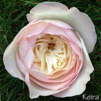 Bouquet e fiori: scelti!! - 1
