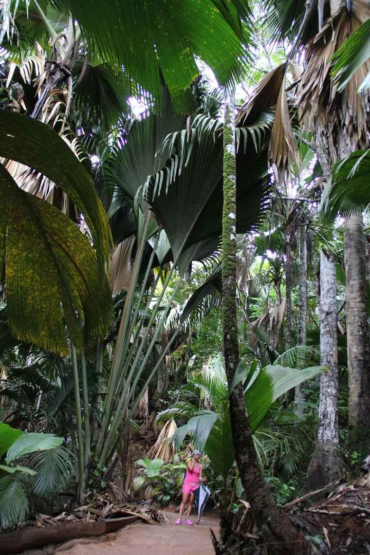 """la foresta """"pluviale"""""""