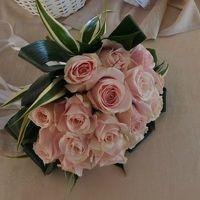 Rose rosa con un po'di verde intorno