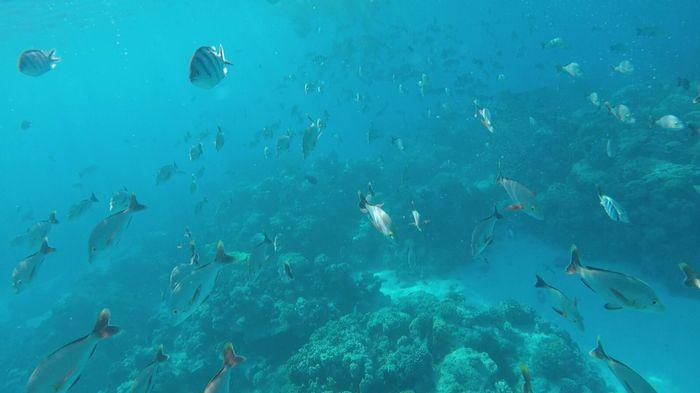 In diretta: America + Polinesia ... Parte otto, Rangiroa! 12