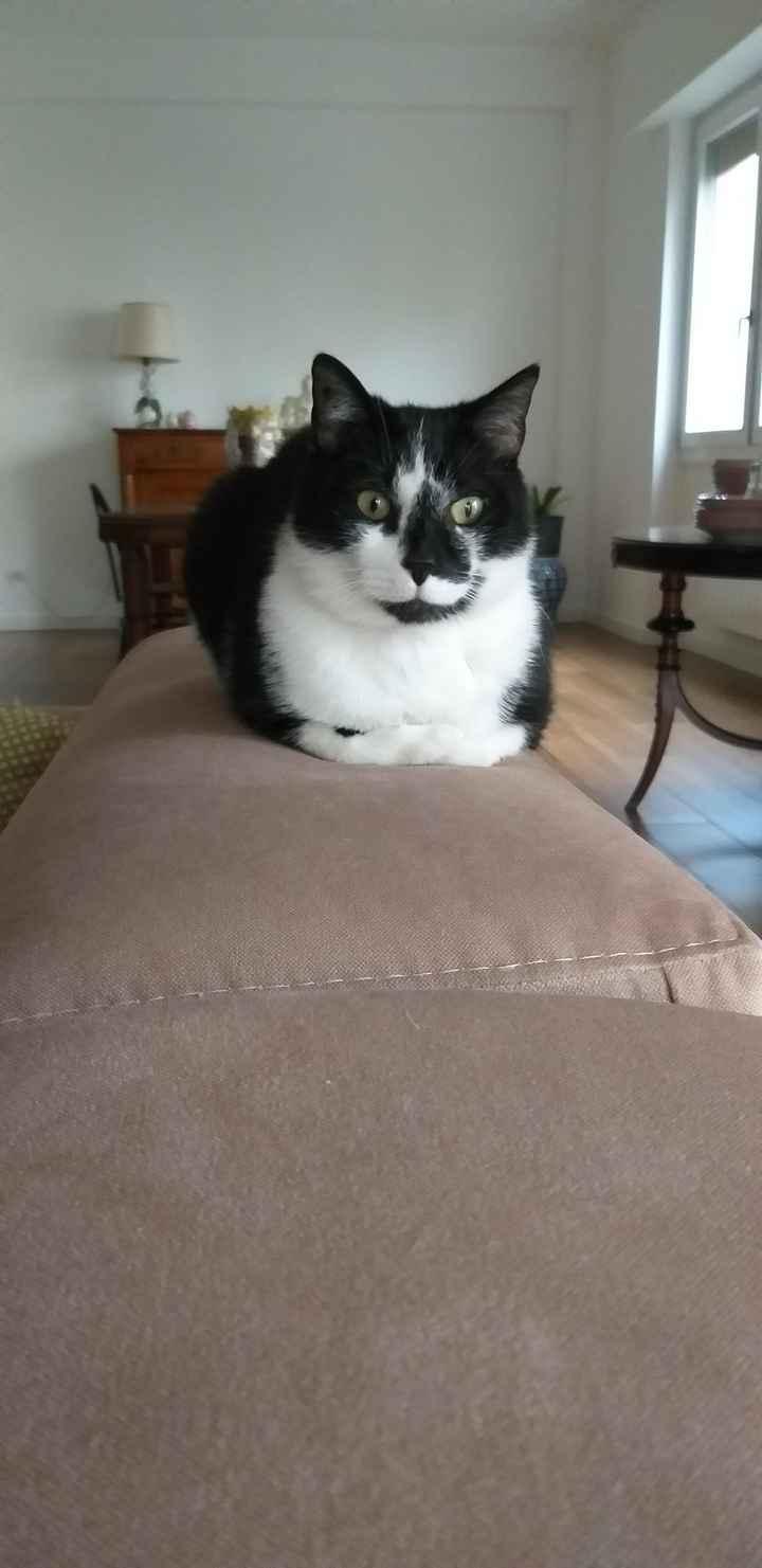 Allarme gatti! 1
