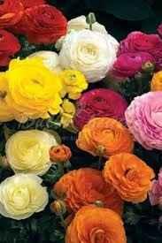💐 fiori 1