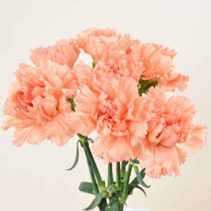 Consiglio Bouquet! Help! - 1