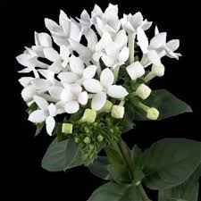 Bouquet total white agosto - 1