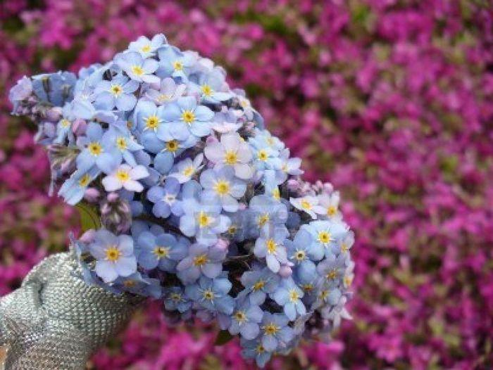 Tema Matrimonio Segni Zodiacali : Segno zodiacali e bouquet forum matrimonio