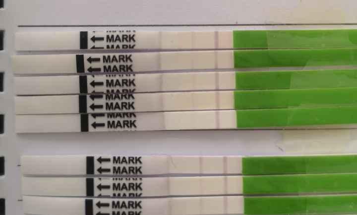 Test ovulazione canadesi - 1