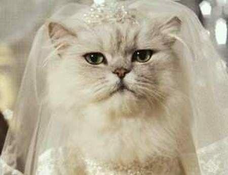 gatta sposa