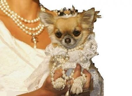 cane sposa