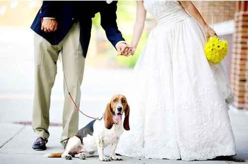 matrimonio e cani