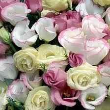 lisianthus o boccioli di rosa
