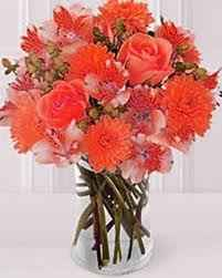 fiori damigella