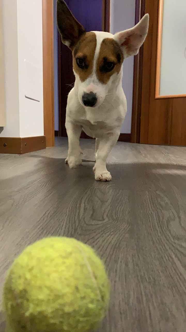 Cani al ricevimento - 1