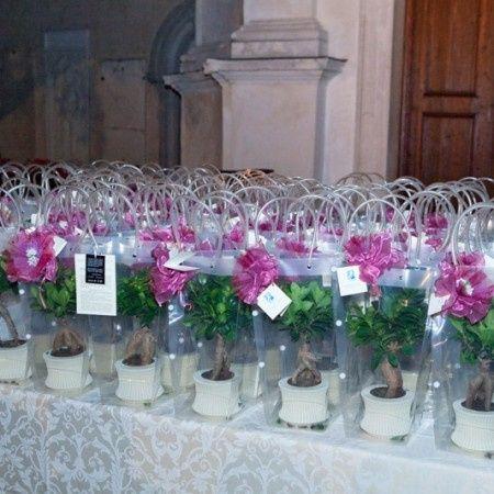Bomboniere Matrimonio Piante.Piantine Varie Come Bomboniere Organizzazione Matrimonio Forum