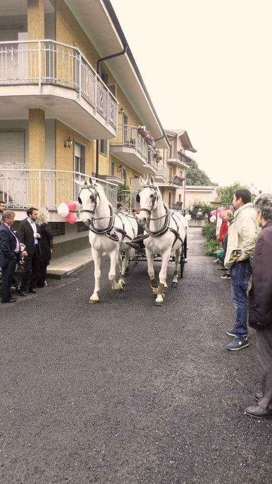 Cavallo e carrozza di cenerentola - 2
