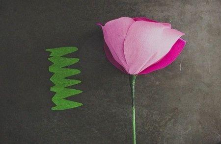 Calice della rosa