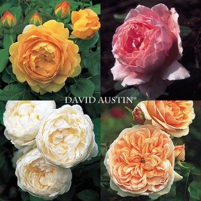 Bouquet di rose inglesi per sposine estive! - 1