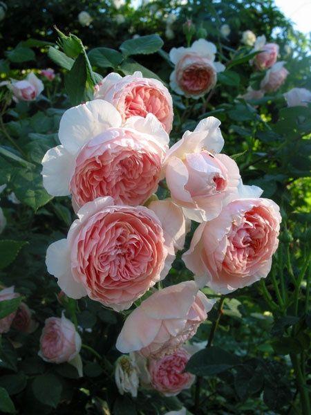 Bouquet di rose inglesi per sposine estive! - 4
