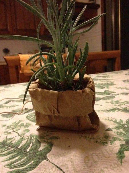 Piante Bomboniere Fai Da Te : Bomboniere piante aromatiche fai da te forum