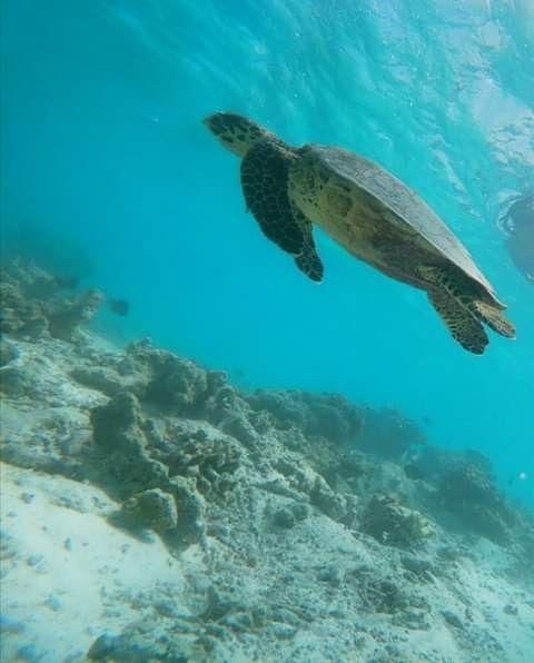 Maldive honeymoon😍❤️ - 5