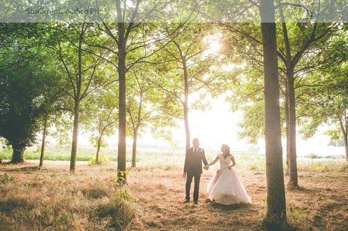 Matrimonio Tema Bosco Incantato : Bosco incantato foto neo spose