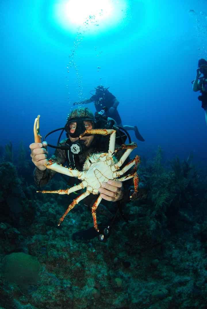 Mio marito durante una delle immersioni...con un mega granchio