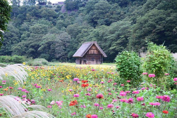 Giappone Tour Eden antico e moderno - 18 giugno 3
