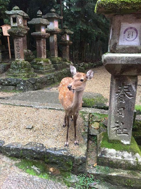Giappone Tour Eden antico e moderno - 18 giugno 10