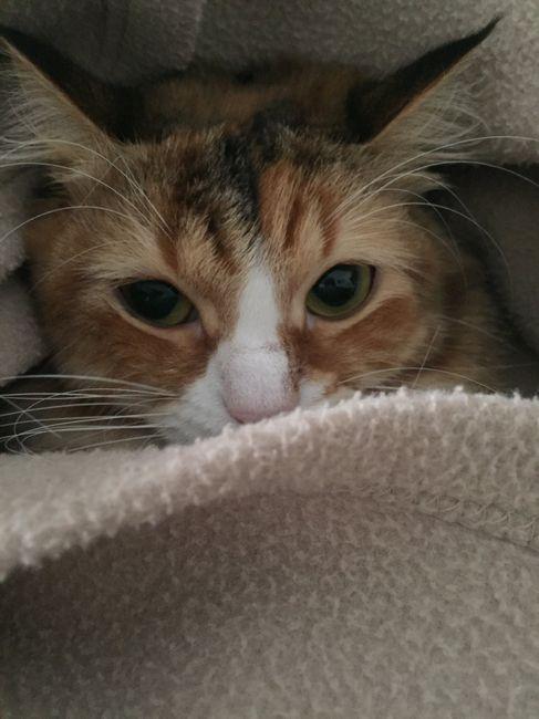 Gatto in casa, non sono immune da toxoplasmosi 1